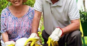 Pares mayores sonrientes que cultivan un huerto junto en jardín almacen de metraje de vídeo