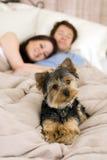 Pares na cama Imagem de Stock Royalty Free