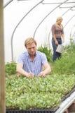 Pares na estufa na exploração agrícola orgânica que verifica plantas Imagem de Stock