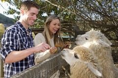 Pares no jardim zoológico de trocas de carícias Fotos de Stock