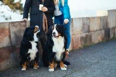 Pares novos com cão imagens de stock royalty free
