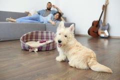 Pares novos com um cão em casa imagens de stock