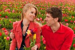 Pares novos felizes em campos de flor holandeses Fotografia de Stock Royalty Free