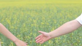 Pares novos que andam através do campo de trigo, do homem do close-up e da fêmea guardando as mãos, luz do alargamento, pessoa ir video estoque