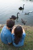Pares por cisnes de observação de uma lagoa - vertical Fotografia de Stock Royalty Free