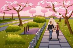 Pares que andam durante Cherry Blossom Fotos de Stock Royalty Free