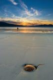 Pares que apreciam o por do sol lindo na praia Luskentyre, ilha de Harris, Escócia Foto de Stock