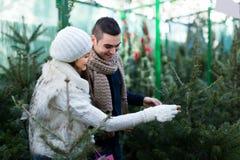 Pares que buscan para el árbol del Año Nuevo Foto de archivo libre de regalías