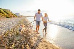 Pares que caminan con los perros en la playa Fotografía de archivo libre de regalías