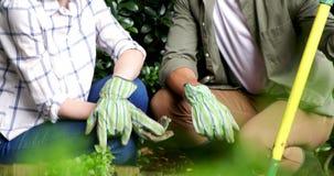 Pares que interagem ao jardinar no jardim vídeos de arquivo