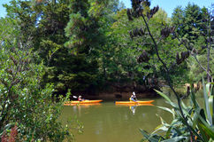 Pares que kayaking sobre o rio Nova Zelândia de Matakana Foto de Stock