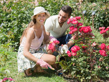 Pares que plantan las plantas en jardín Fotografía de archivo libre de regalías