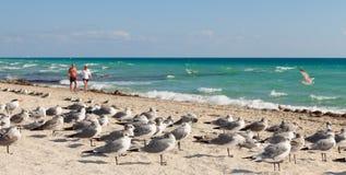 Pares que recorren a lo largo de la línea de la playa Imagen de archivo libre de regalías