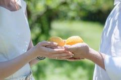 Pares que sostienen a disposición dos limones Imagen de archivo libre de regalías