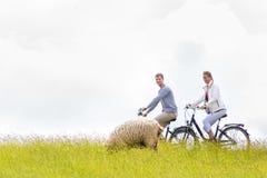 Pares que tienen viaje de la bicicleta de la costa de mar en el dique Imagen de archivo