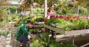 Pares que toman el cuidado de flores en jardín almacen de metraje de vídeo