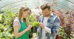 Pares románticos con la planta verde en invernadero almacen de video