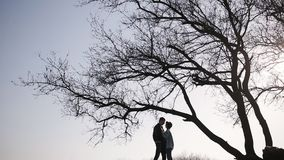 Pares románticos de la fecha en naturaleza cerca de un árbol enorme almacen de metraje de vídeo
