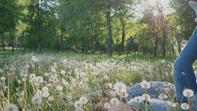Pares románticos en verano en un claro Caen en la hierba con los dientes de león blancos feliz junto Verano El sol metrajes
