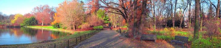 Pares sênior no parque fotografia de stock royalty free