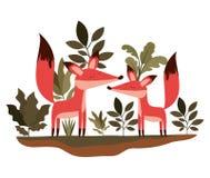 Pares selvagens das raposas na selva ilustração stock