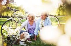 Pares superiores bonitos com cão e bicicletas fora na natureza da mola fotografia de stock
