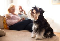 Pares superiores com cão em casa fotografia de stock royalty free