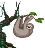 Paresse accrochant sur l'arbre illustration stock