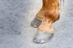 Paret av hästen traskar det bruna loppet som springer järnsporthästskor på en dammig närbild för grå yttersida av bakre ben med k royaltyfri fotografi