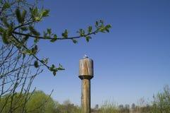 Paret av storkar ska på våren bygga ett rede på vattentornet Arkivbild