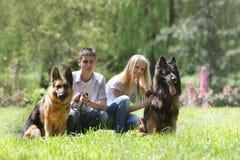 paret dogs utomhus Royaltyfria Foton