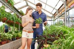 Paret köper växter i trädgårdmitt royaltyfria foton