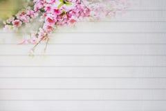 Parete bianca con i fiori di ciliegia, ciliege che appendono giù bello fotografia stock