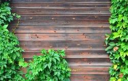 Parete con l'edera che cresce su  Fotografia Stock