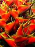 Parete dei fiori dell'artiglio dell'aragosta Immagini Stock
