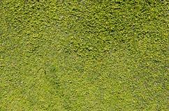 Parete dei fogli verdi Immagine Stock