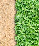Parete del Brown e priorità bassa verde del foglio Fotografia Stock