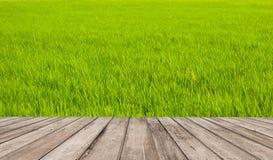 Parete del campo e pavimento verdi di legno Immagine Stock