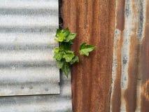 Parete del ferro ondulato Fotografia Stock Libera da Diritti