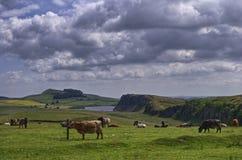 Parete del Hadrian, Northunbria Fotografia Stock