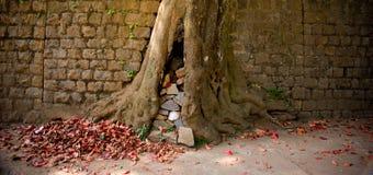 Parete dell'albero delle macerie Fotografie Stock