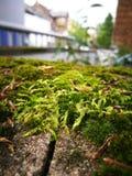 Parete dell'erba verde Fotografia Stock Libera da Diritti