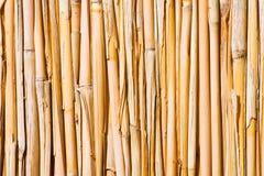 Parete della canna. Tubi verticali nei colori naturali Fotografia Stock
