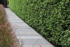 Parete della foglia di verde del passaggio pedonale della località di soggiorno Immagini Stock Libere da Diritti