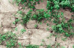 Parete della roccia con le piante su  fotografie stock