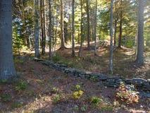 Parete della roccia nella foresta Fotografia Stock