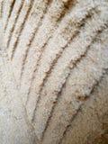 Parete della sabbia immagine stock