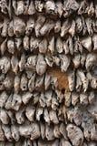 Parete delle coperture di ostrica Fotografia Stock Libera da Diritti