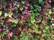 Parete delle foglie Immagine Stock