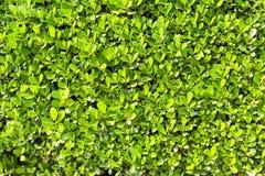Parete delle piante Fotografia Stock